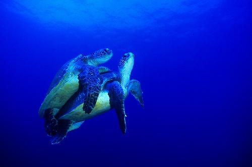 oceananimals33.jpg